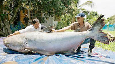 Weekly news for World largest fish